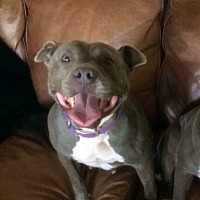 Adopt A Pet :: Brina - Tracy, CA