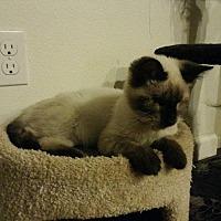 Adopt A Pet :: Kitten 15797 (Mr.Magoo) - Parlier, CA
