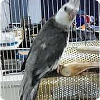 Adopt A Pet :: Frostmorn - Lenexa, KS