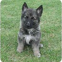 Adopt A Pet :: Wyatt - Pike Road, AL