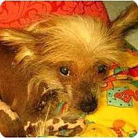 Adopt A Pet :: Dixie-VA - Mays Landing, NJ