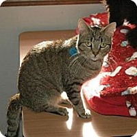 Adopt A Pet :: Micky - Grand Rapids, MI
