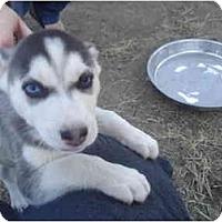 Adopt A Pet :: Oakley - Jacksonville, NC