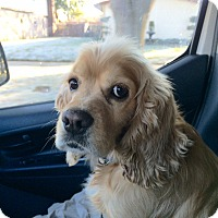 Adopt A Pet :: Dempsey - kennebunkport, ME