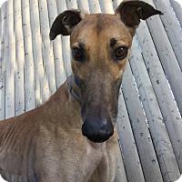 Adopt A Pet :: Zane - Swanzey, NH