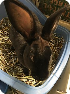 Rex for adoption in Edinburg, Pennsylvania - Raphael