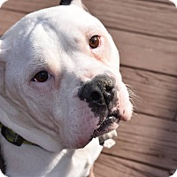 Adopt A Pet :: Judah - Dayton, OH
