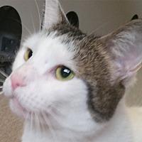 Adopt A Pet :: Hazel - Sarasota, FL