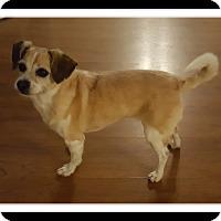 Adopt A Pet :: GIGI LOVE - Winchester, CA