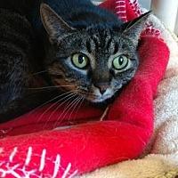 Adopt A Pet :: Fern - Attica, NY