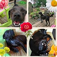 Adopt A Pet :: Skye - Media, PA