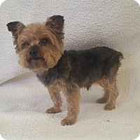 Adopt A Pet :: Ellis Montgomery - Urbana, OH