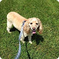 Adopt A Pet :: Toby -Adopted! - Kannapolis, NC