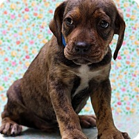 Adopt A Pet :: Saturn - Waldorf, MD