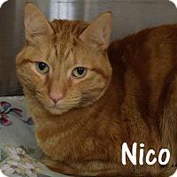 Adopt A Pet :: Nico - Las Vegas, NV