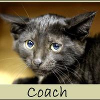 Adopt A Pet :: Coach - Sullivan, IN