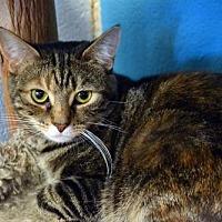 Adopt A Pet :: Tamara - Akron, OH