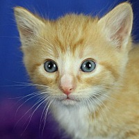 Adopt A Pet :: Tanner - Winston-Salem, NC