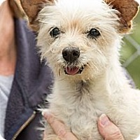 Adopt A Pet :: Scooby - Acton, CA