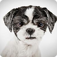Adopt A Pet :: Luke - New York, NY