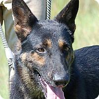 Adopt A Pet :: KC - Preston, CT