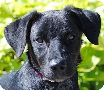 Retriever (Unknown Type)/Labrador Retriever Mix Dog for adoption in Cedartown, Georgia - Tony