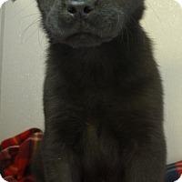 Adopt A Pet :: Marie - Manning, SC