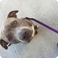 Adopt A Pet :: Zyna - Crestline, CA