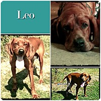 Adopt A Pet :: Leo -ADOPTED - Ontario, ON