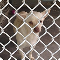 Adopt A Pet :: Rocky - Clarkesville, GA