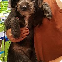 Adopt A Pet :: Stewart - Alhambra, CA