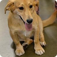 Adopt A Pet :: Collette #1248 - Arlington Heights, IL