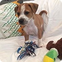 Adopt A Pet :: Owen - Atlanta, GA