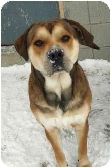 Husky/Shepherd (Unknown Type) Mix Dog for adoption in Wallaceburg, Ontario - Mario