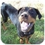 Photo 2 - Rottweiler Dog for adoption in Earleville, Maryland - Jackson