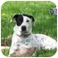 Photo 2 - Dalmatian Mix Dog for adoption in Milwaukee, Wisconsin - Flower