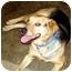 Photo 2 - German Shepherd Dog Mix Dog for adoption in Avon, New York - Cheyenne
