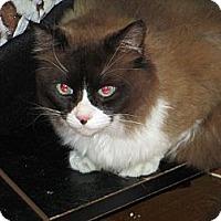 Adopt A Pet :: Mr. Mousse - Atlanta, GA