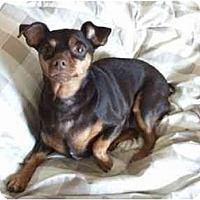 Adopt A Pet :: Snickers - Nashville, TN