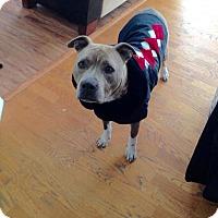 Adopt A Pet :: Lulu - West Richland, WA