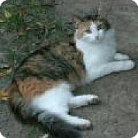 Adopt A Pet :: Amelia - East Hanover, NJ