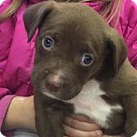 Adopt A Pet :: Mr. Mocha - Marlton, NJ