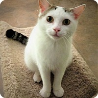 Adopt A Pet :: Sweetpea - Chattanooga, TN