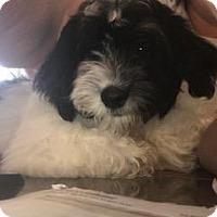 Adopt A Pet :: Friday - Prole, IA
