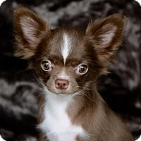 Adopt A Pet :: COURTESY POST - Minx - Picayune, MS