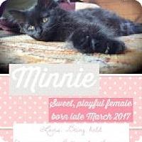 Adopt A Pet :: Minnie - McHenry, IL