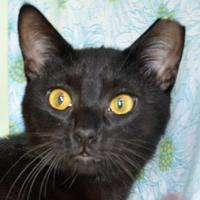 Adopt A Pet :: Whiskers - Englewood, FL