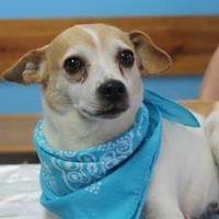 Adopt A Pet :: Rambina - Robinson, IL