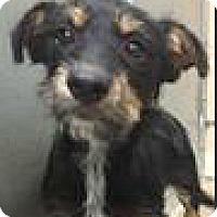 Adopt A Pet :: Elvis-ADOPTION PENDING - Boulder, CO