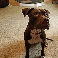 Adopt A Pet :: Jada - Rockford, IL
